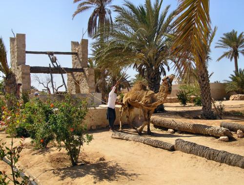 Parque Djerba