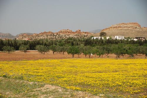 Sidi Jdidi y las basílicas cristianas